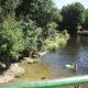 Río Alberche - Puente Nueva